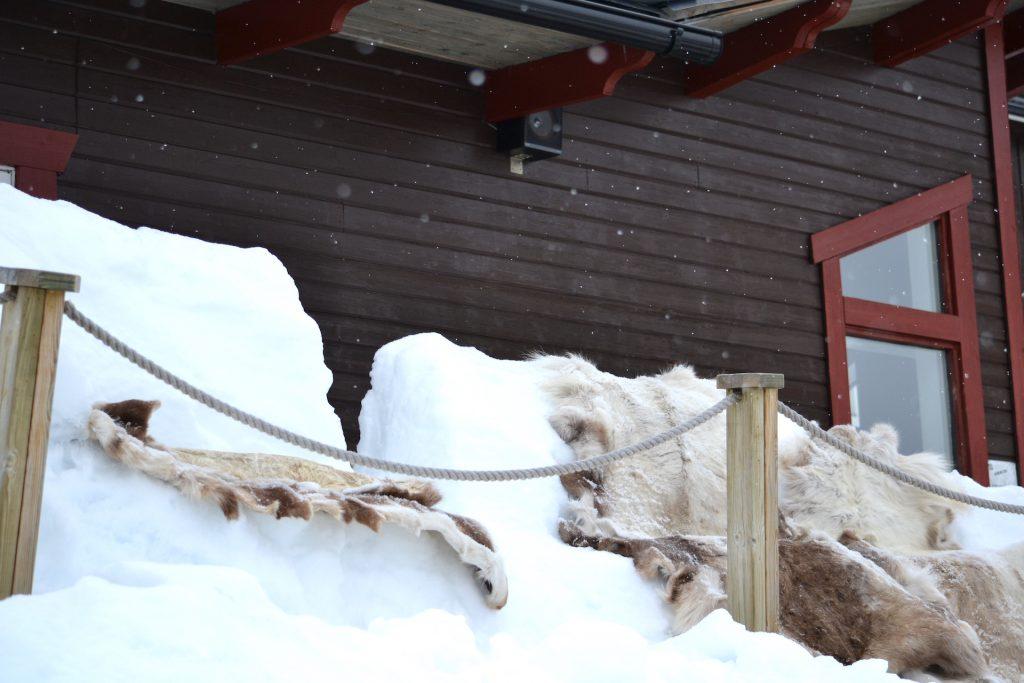 Vintermys hos Åkersjöns Fjällhotell